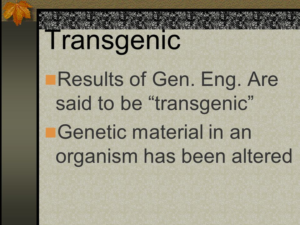 Transgenic Results of Gen. Eng. Are said to be transgenic