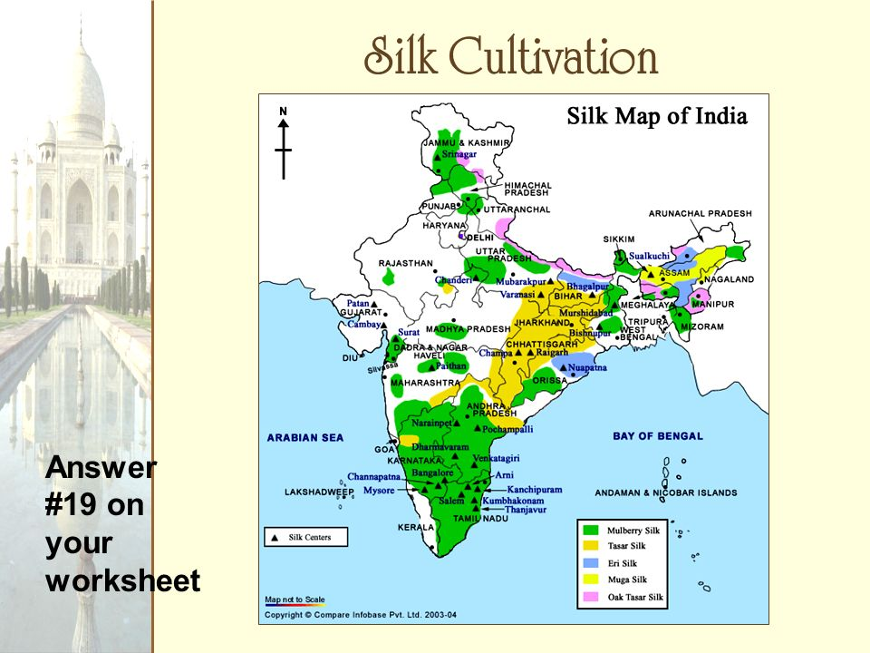 Silk Cultivation Answer #19 on your worksheet