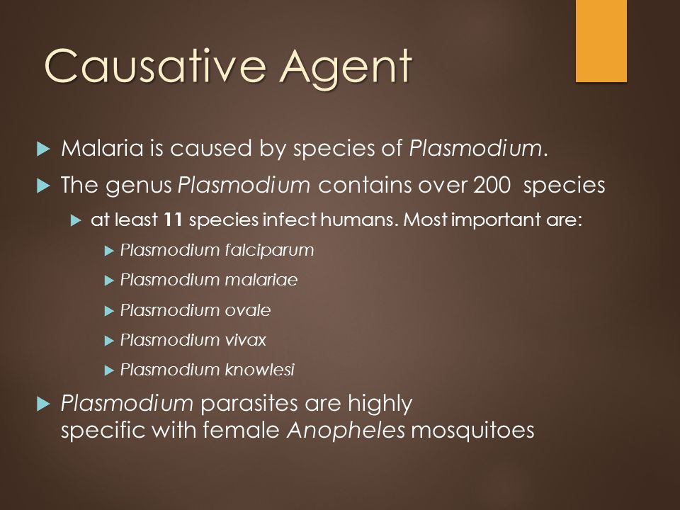 what is the causative organism for malaria