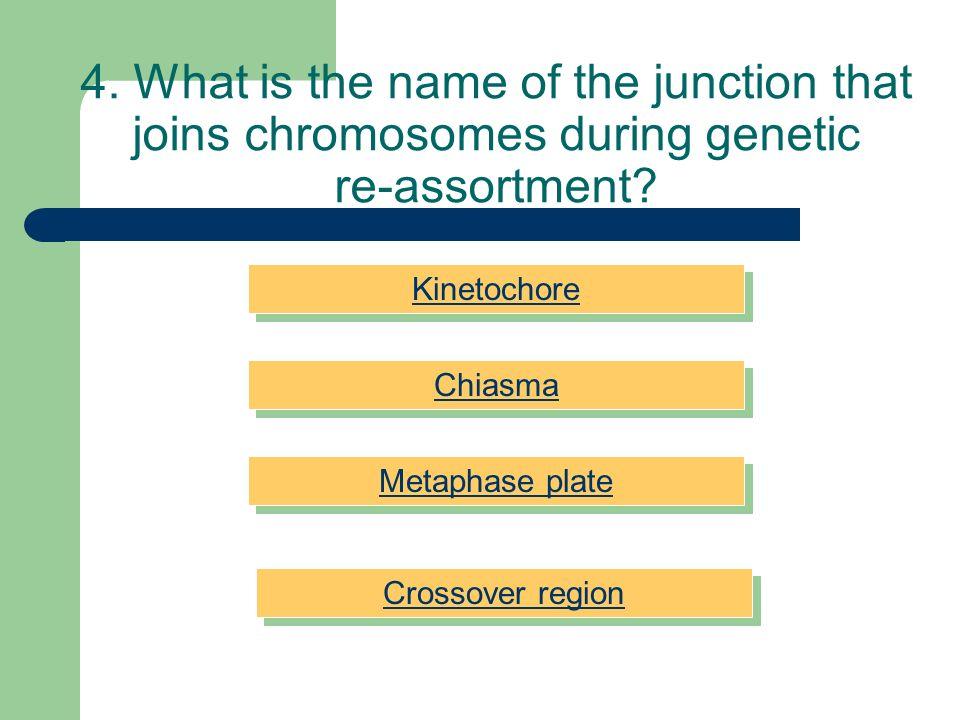 4. What is the name of the junction that joins chromosomes during genetic re-assortment