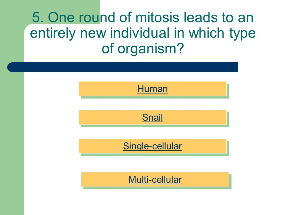 5. One round of mitosis leads to an entirely new individual in which type of organism