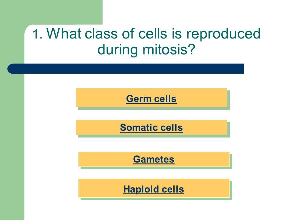 1. What class of cells is reproduced during mitosis