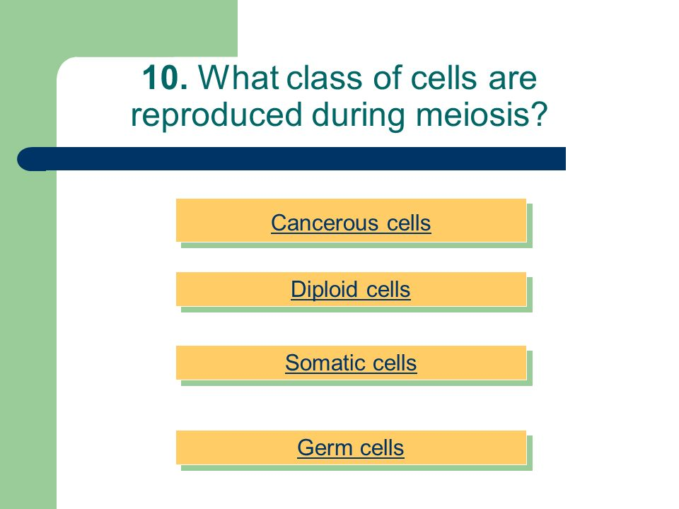 10. What class of cells are reproduced during meiosis