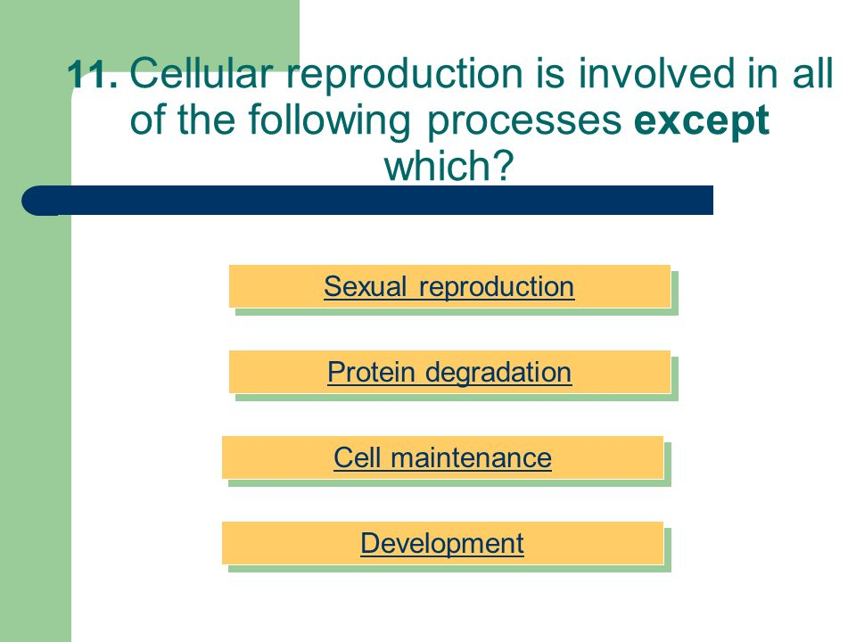 11. Cellular reproduction is involved in all of the following processes except which