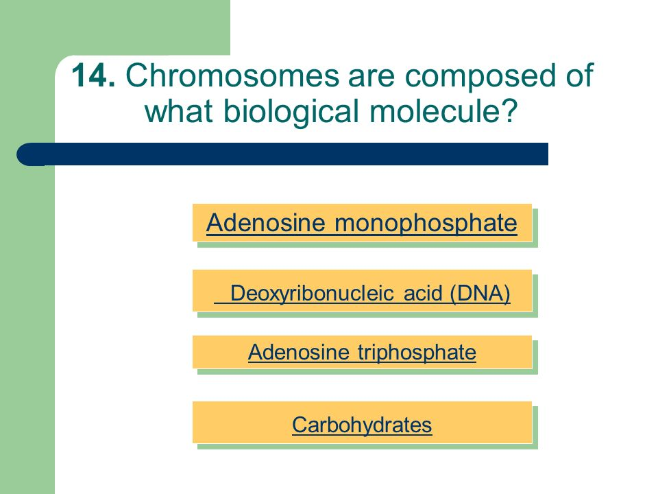 14. Chromosomes are composed of what biological molecule
