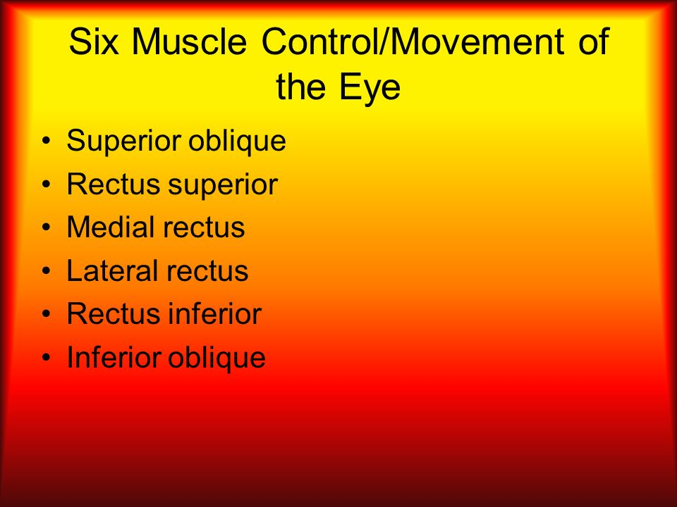 Six Muscle Control/Movement of the Eye