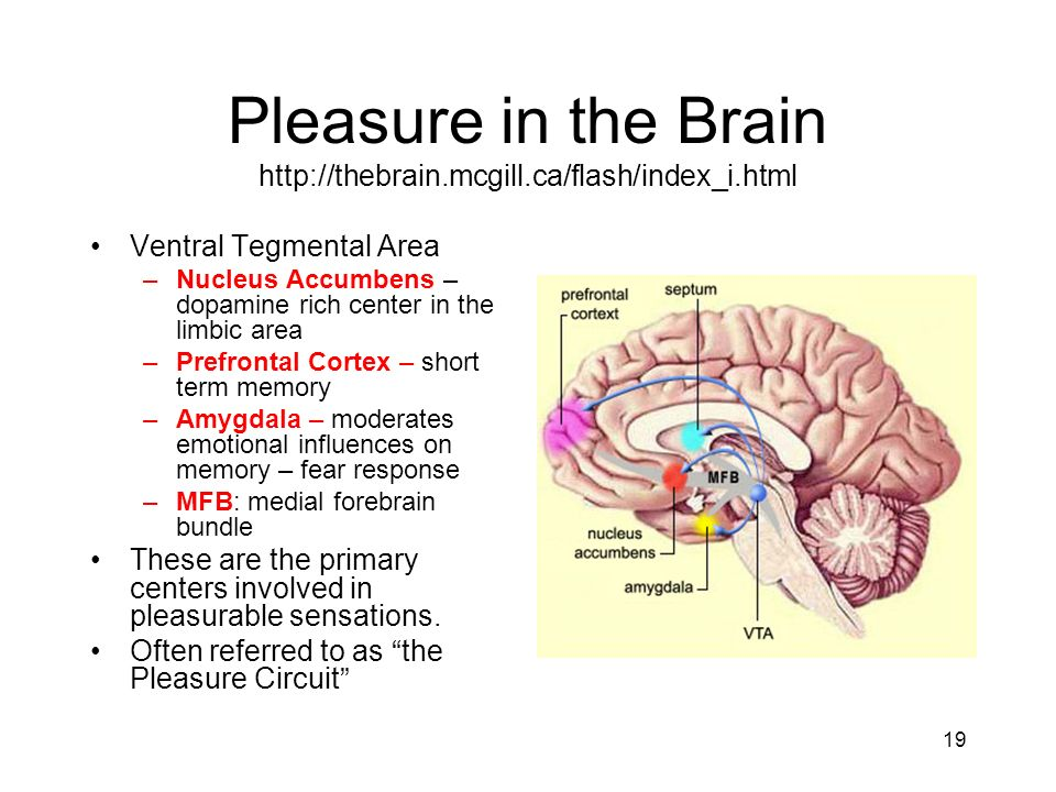 Pleasure in the Brain http://thebrain.mcgill.ca/flash/index_i.html
