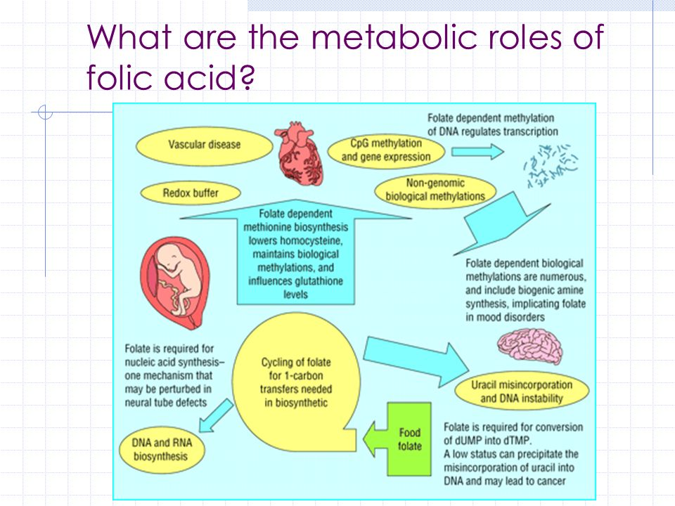 What are the metabolic roles of folic acid