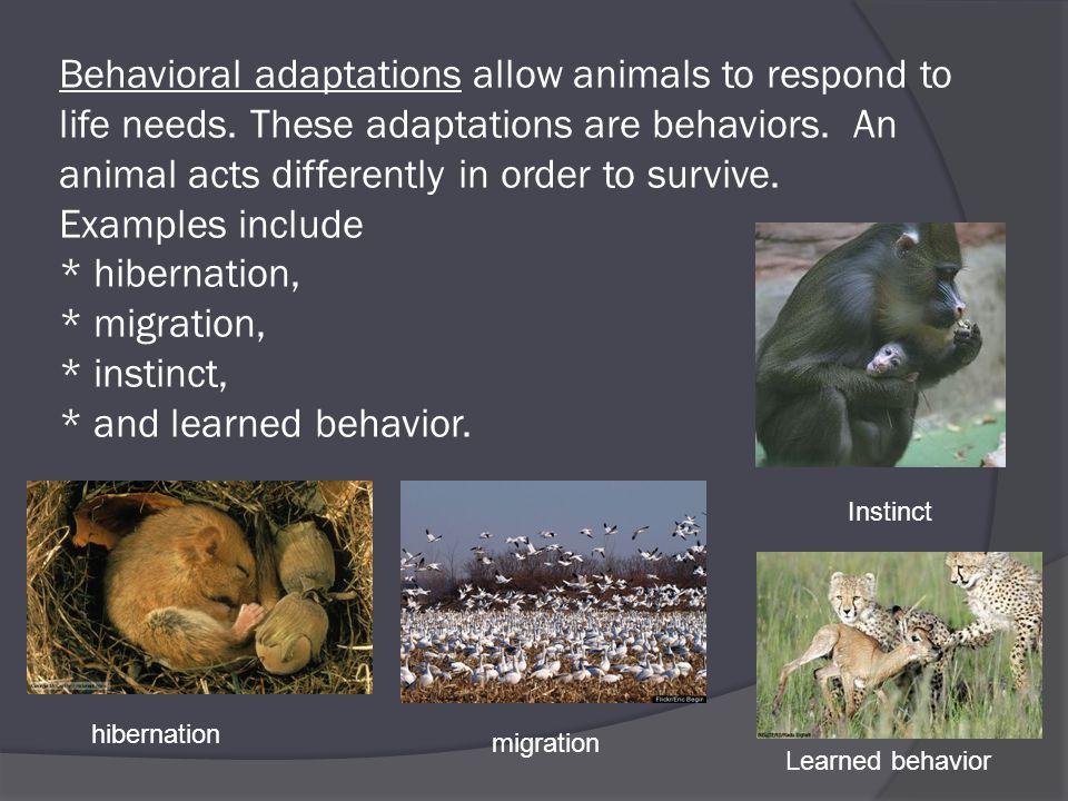 Image result for animal adaptations instinctive and behavioral