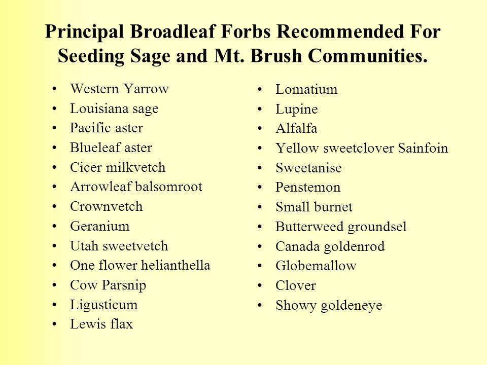 Principal Broadleaf Forbs Recommended For Seeding Sage and Mt