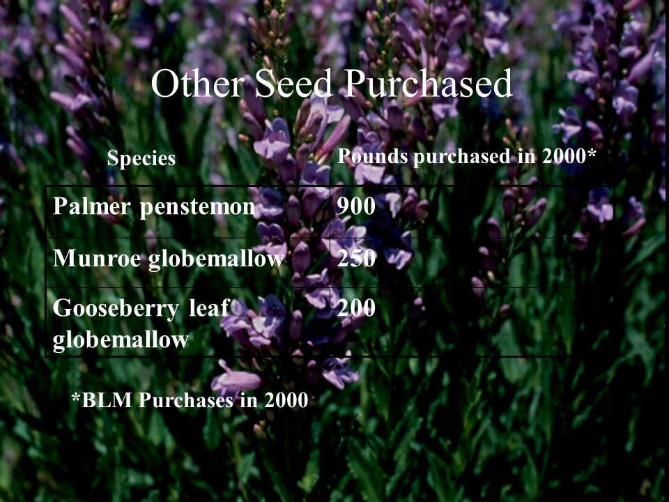 Other Seed Purchased Palmer penstemon 900 Munroe globemallow 250