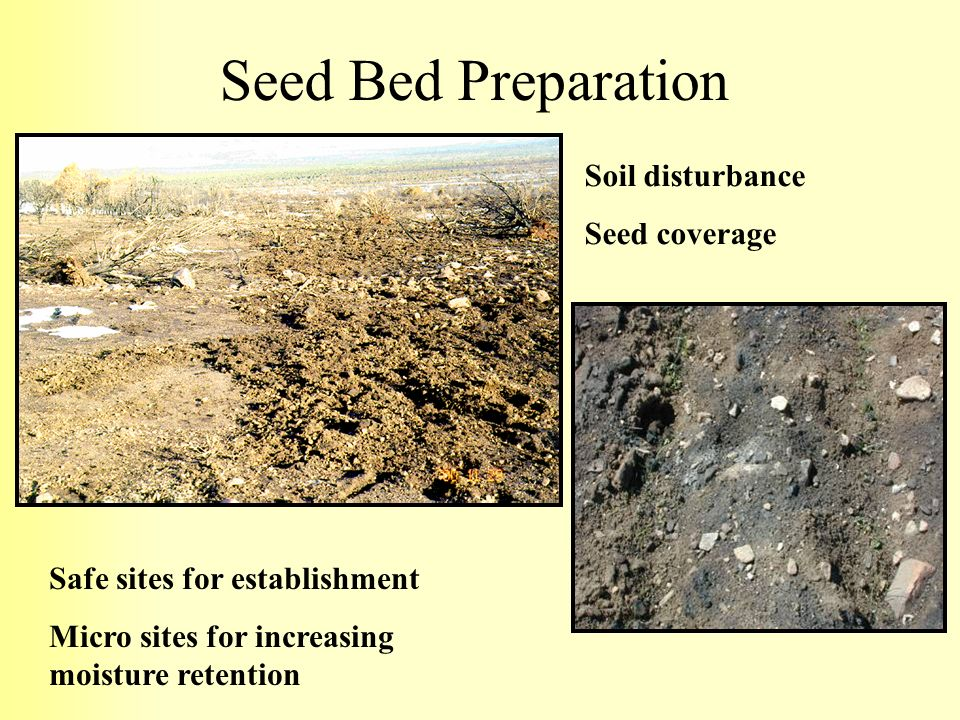 Seed Bed Preparation Soil disturbance Seed coverage