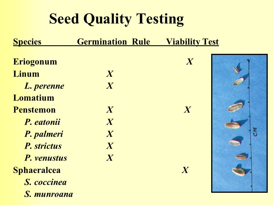 Seed Quality Testing Species Germination Rule Viability Test
