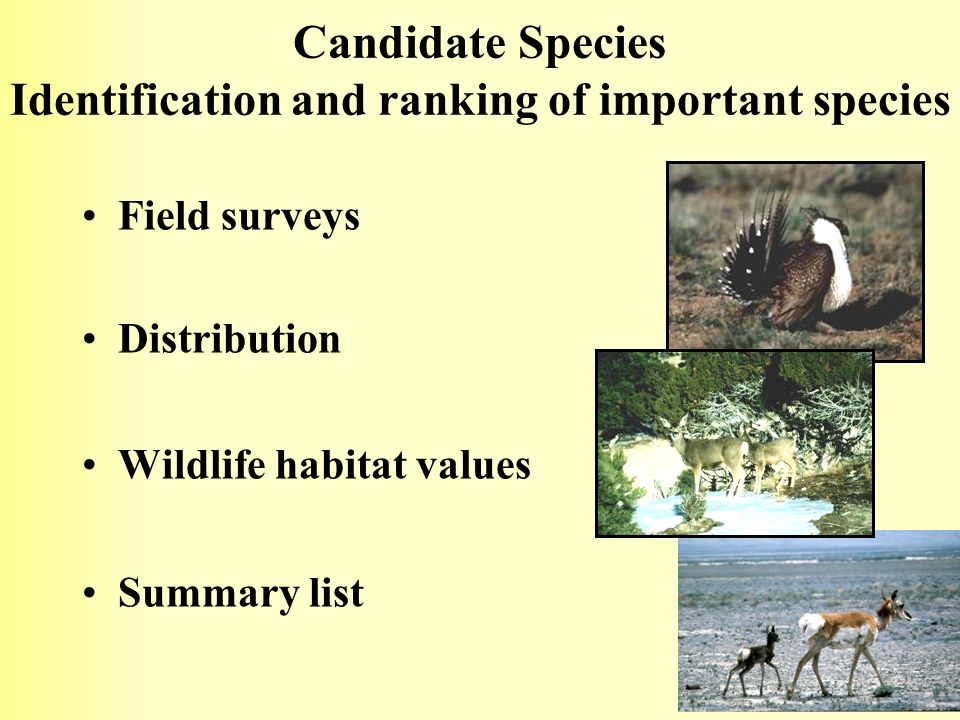 Candidate Species Identification and ranking of important species