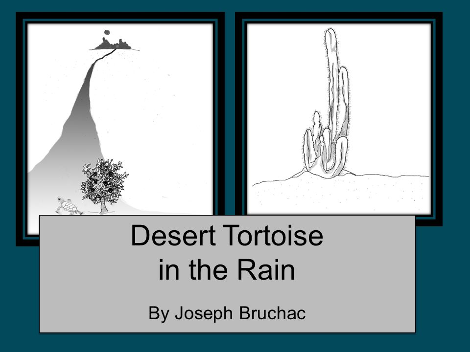Desert Tortoise in the Rain By Joseph Bruchac