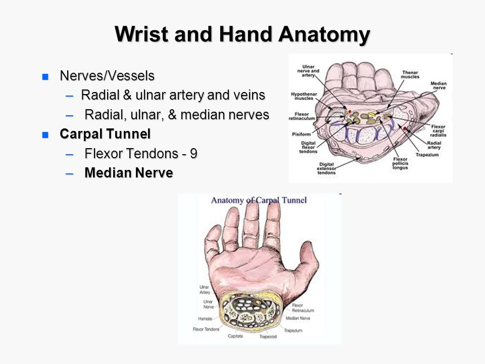 Upper Limb Topography. - ppt video online download