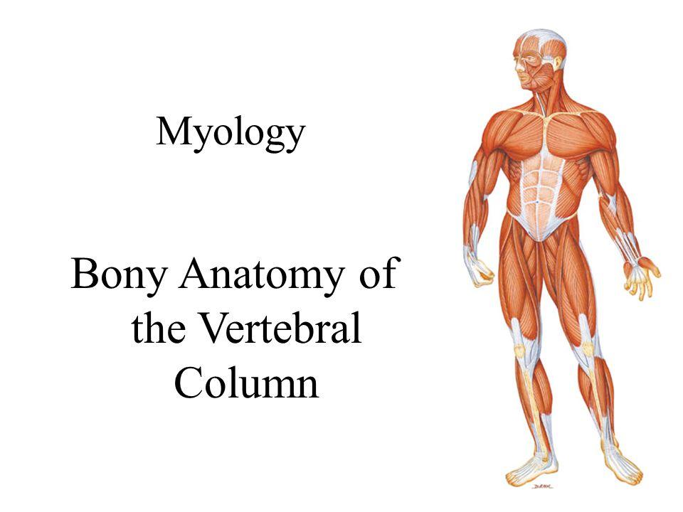 Bony Anatomy of the Vertebral Column - ppt download