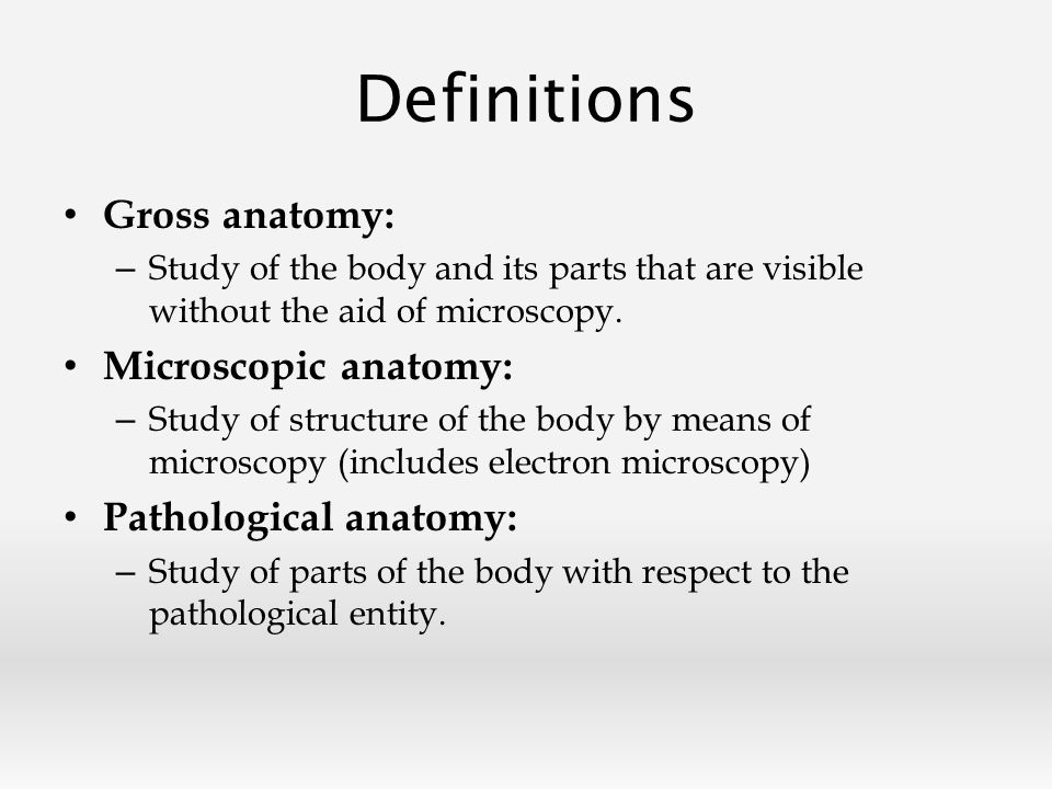 Overview Anatomy And Physiology Definitions Planes Of Reference