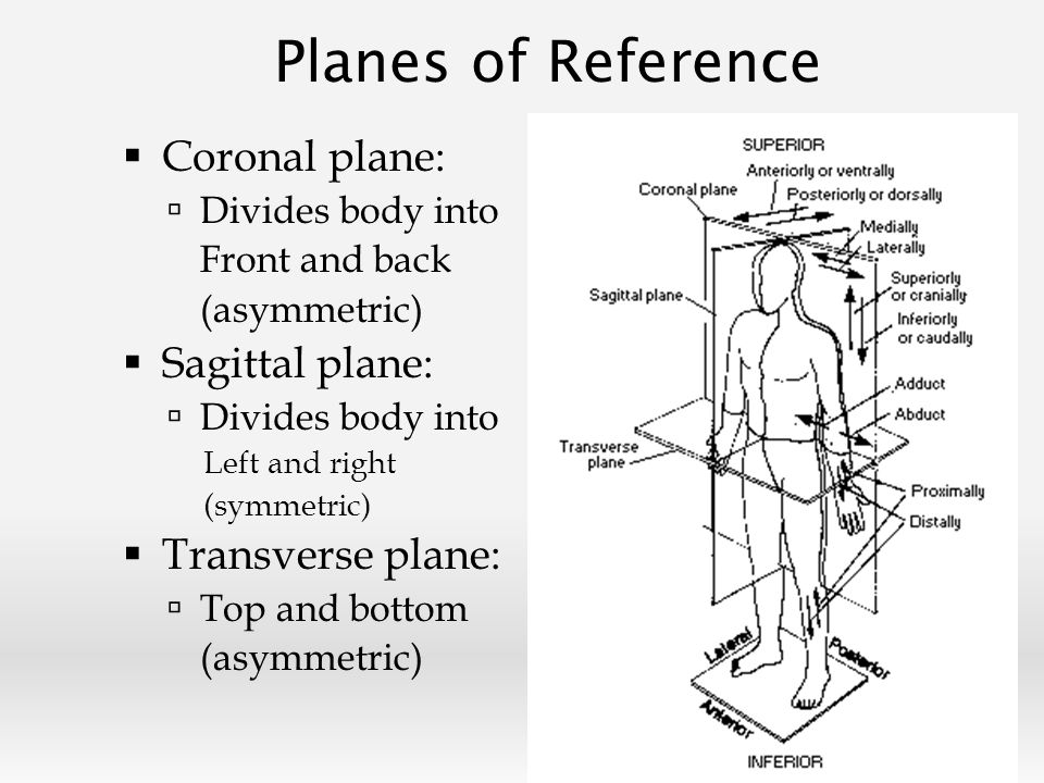Overview Anatomy and physiology definitions Planes of Reference ...