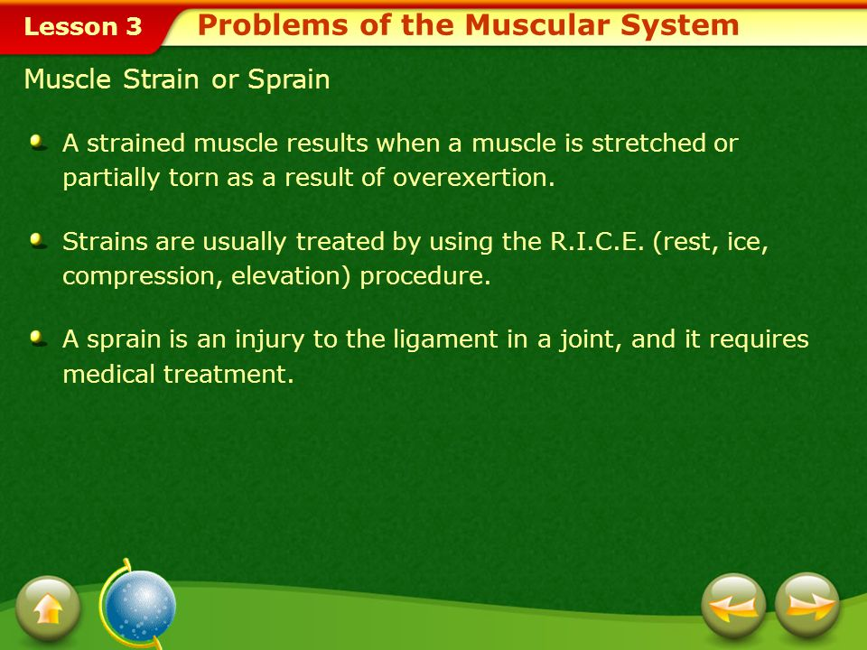 Problems of the Muscular System