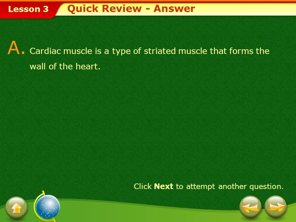 Quick Review - Answer A. Cardiac muscle is a type of striated muscle that forms the wall of the heart.