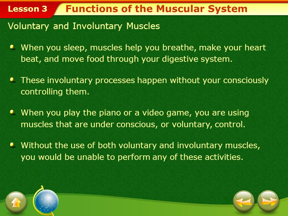 Functions of the Muscular System