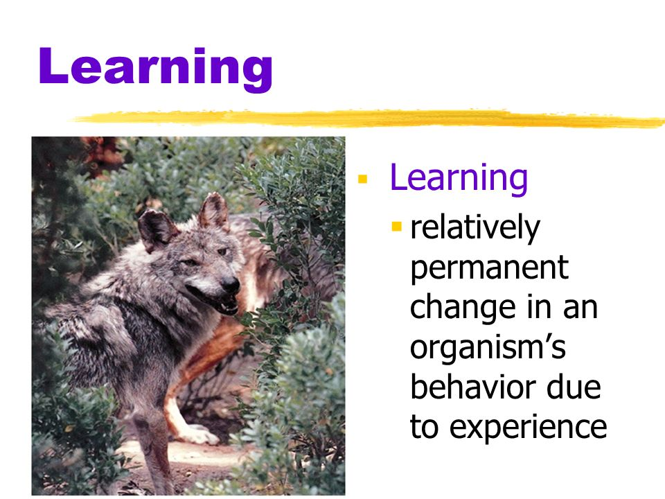 Learning Learning relatively permanent change in an organism's behavior due to experience