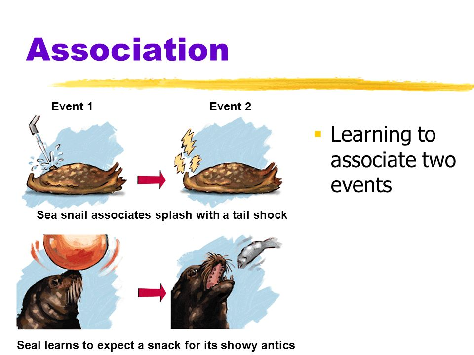 Association Learning to associate two events Event 1 Event 2