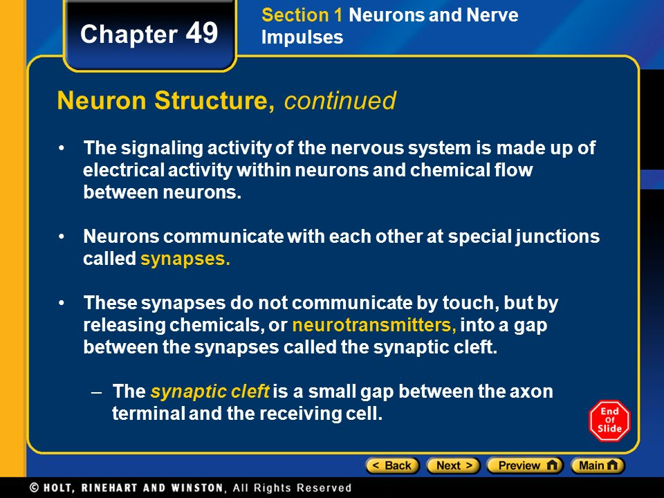 Chapter 49 table of contents section 1 neurons and nerve impulses 7 neuron structure continued ccuart Image collections