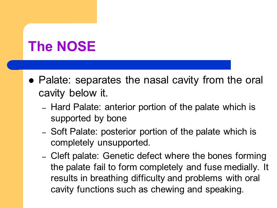 The NOSE Palate: separates the nasal cavity from the oral cavity below it. Hard Palate: anterior portion of the palate which is supported by bone.
