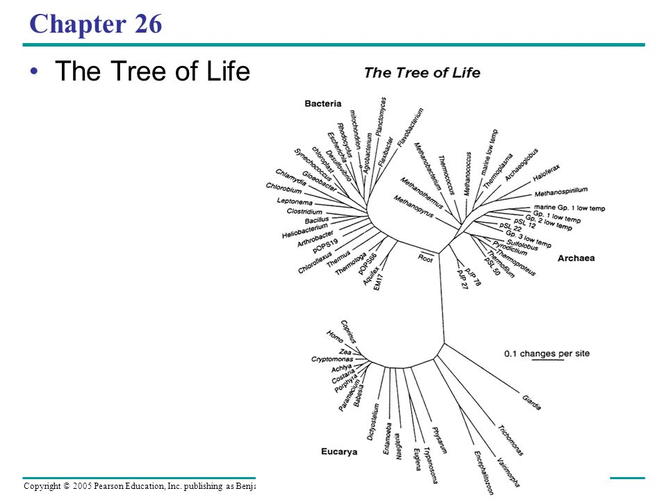Chapter 26 The Tree of Life