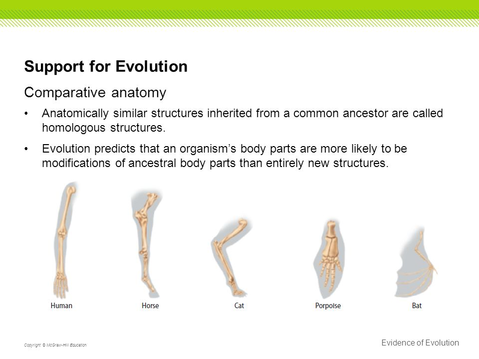15.2 Evidence of Evolution 7(A) Analyze and evaluate how evidence of ...