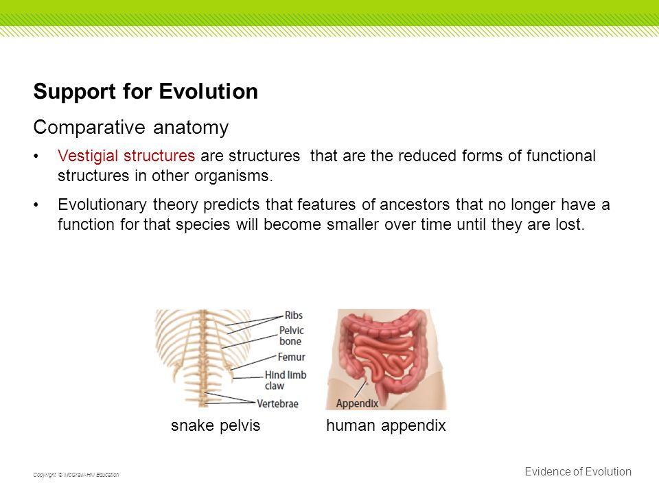 152 Evidence Of Evolution 7a Analyze And Evaluate How Evidence Of