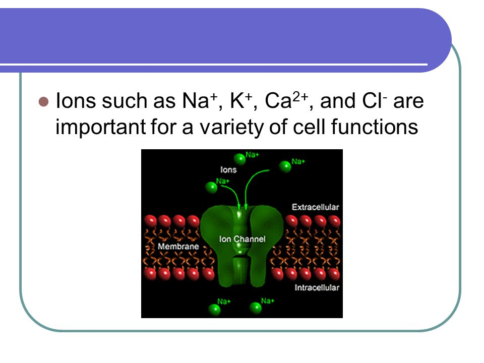 Ions such as Na+, K+, Ca2+, and Cl- are important for a variety of cell functions