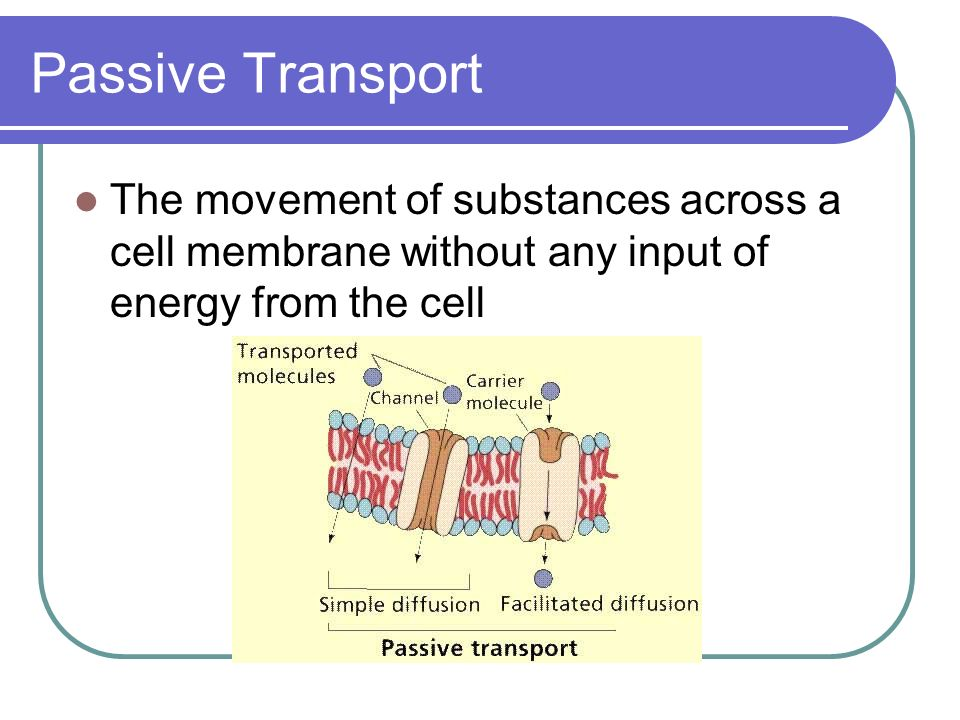 Passive Transport The movement of substances across a cell membrane without any input of energy from the cell.