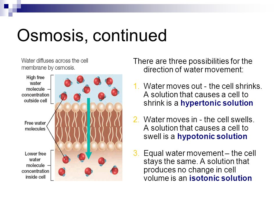 Osmosis, continued There are three possibilities for the direction of water movement: