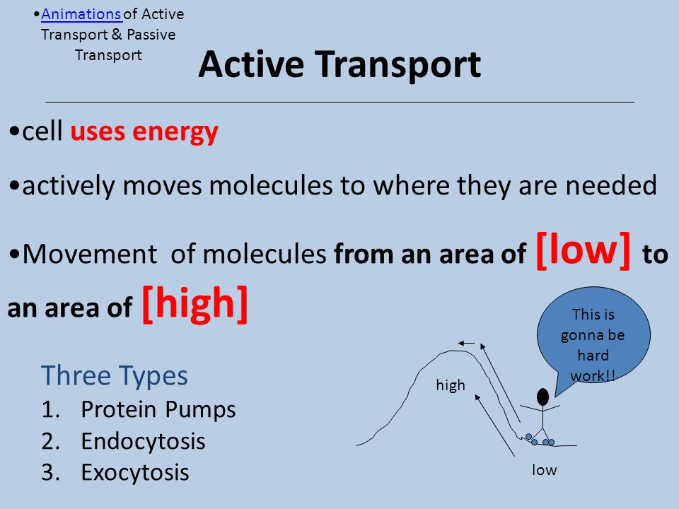 Active Transport cell uses energy
