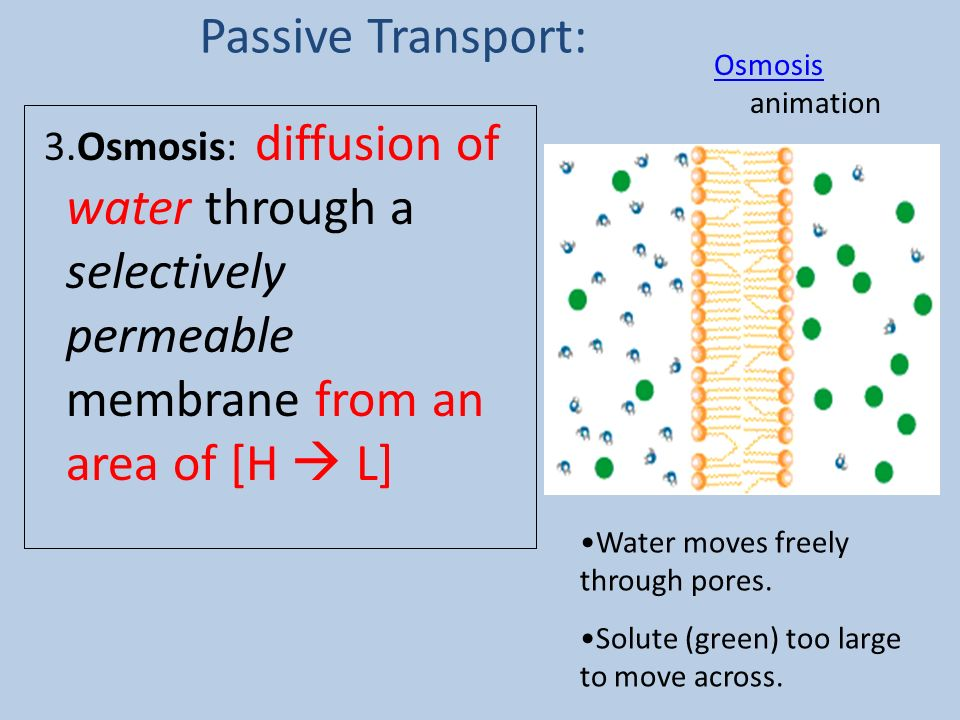 Passive Transport: Osmosis animation. 3.Osmosis: diffusion of water through a selectively permeable membrane from an area of [H  L]