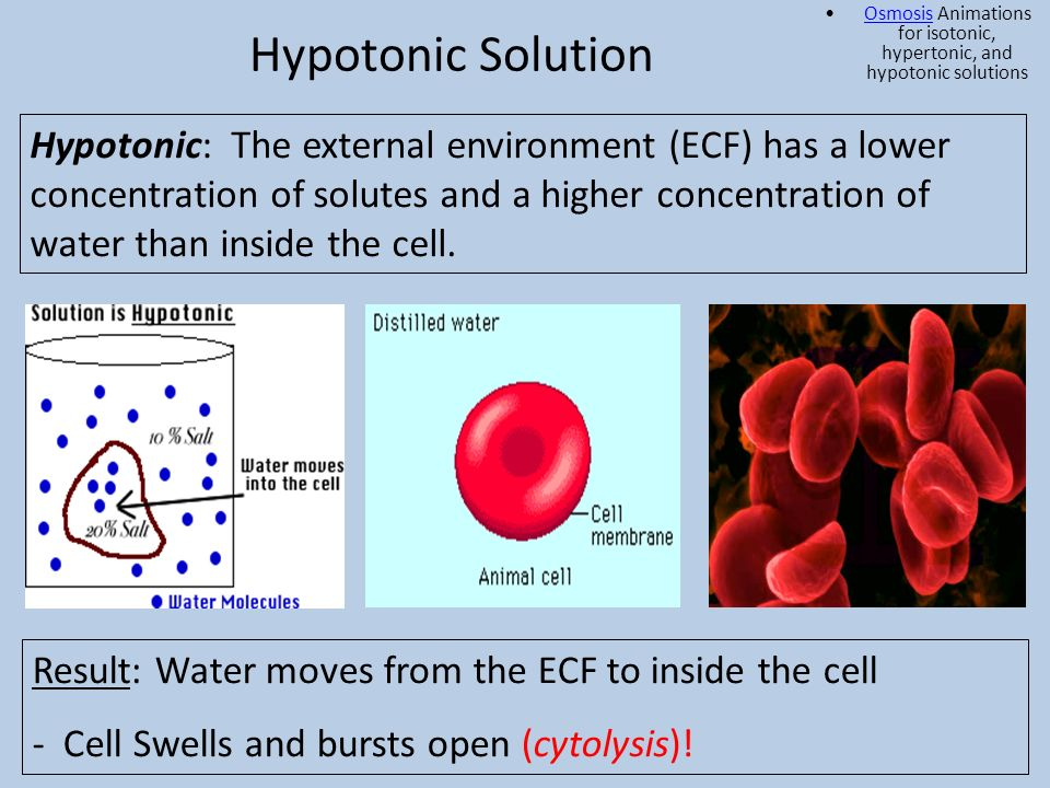 Osmosis Animations for isotonic, hypertonic, and hypotonic solutions