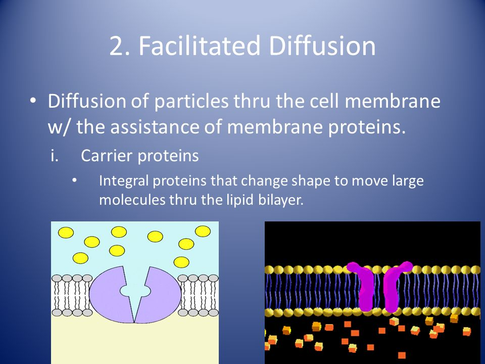 2. Facilitated Diffusion