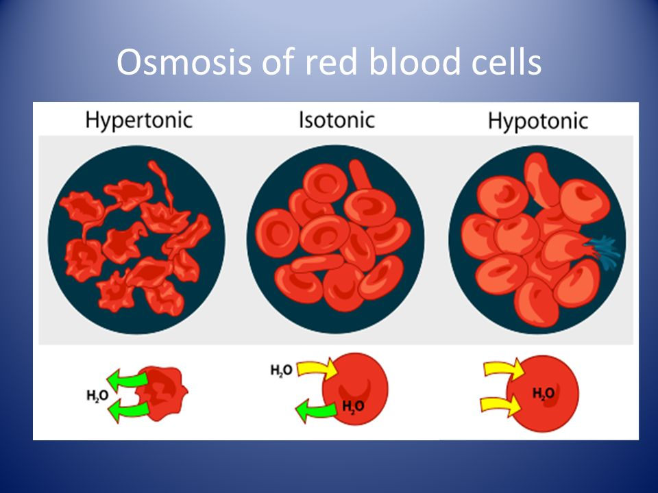 Osmosis of red blood cells