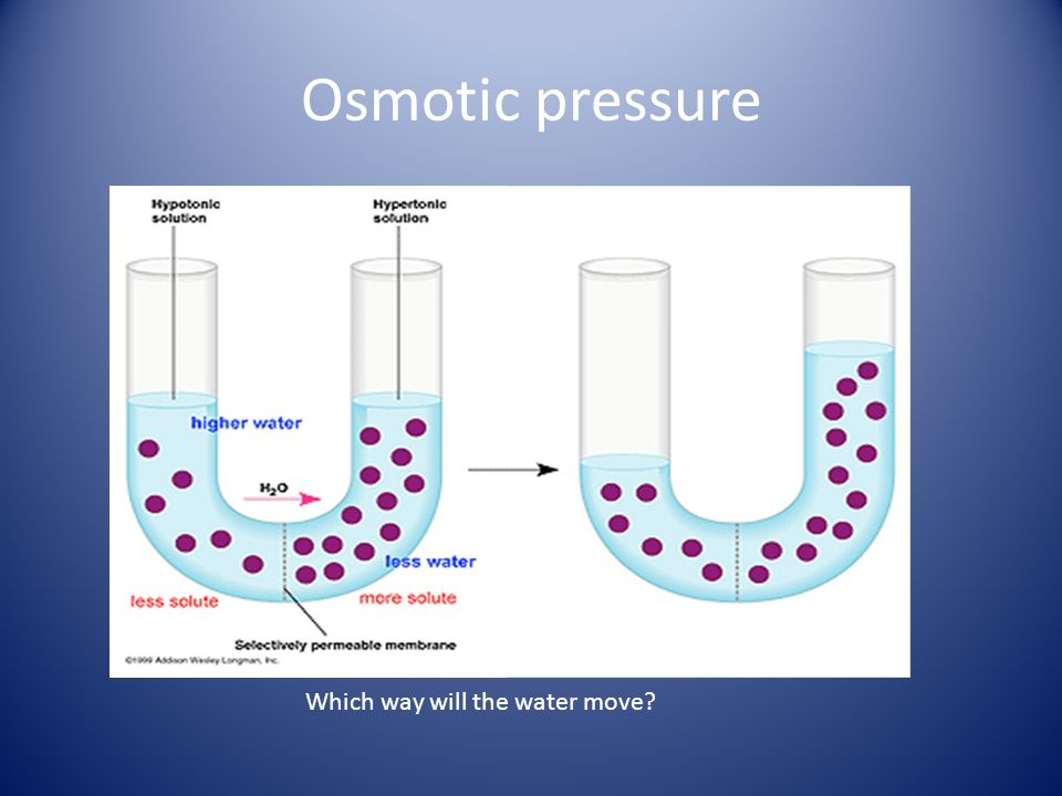 Osmotic pressure Which way will the water move