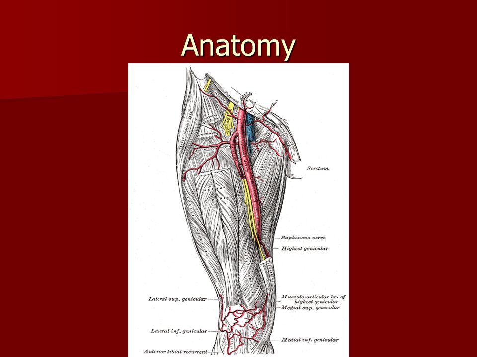 Lower Extremity Vascular Disease Ppt Video Online Download