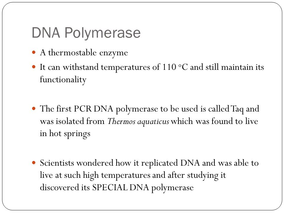 DNA Polymerase A thermostable enzyme