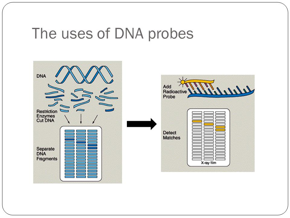The uses of DNA probes