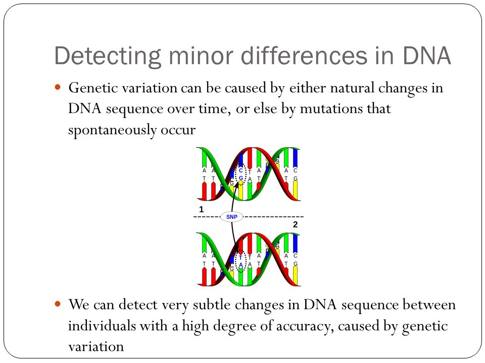 Detecting minor differences in DNA