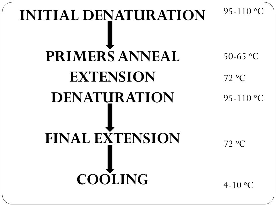 oC INITIAL DENATURATION PRIMERS ANNEAL EXTENSION DENATURATION FINAL EXTENSION COOLING oC.
