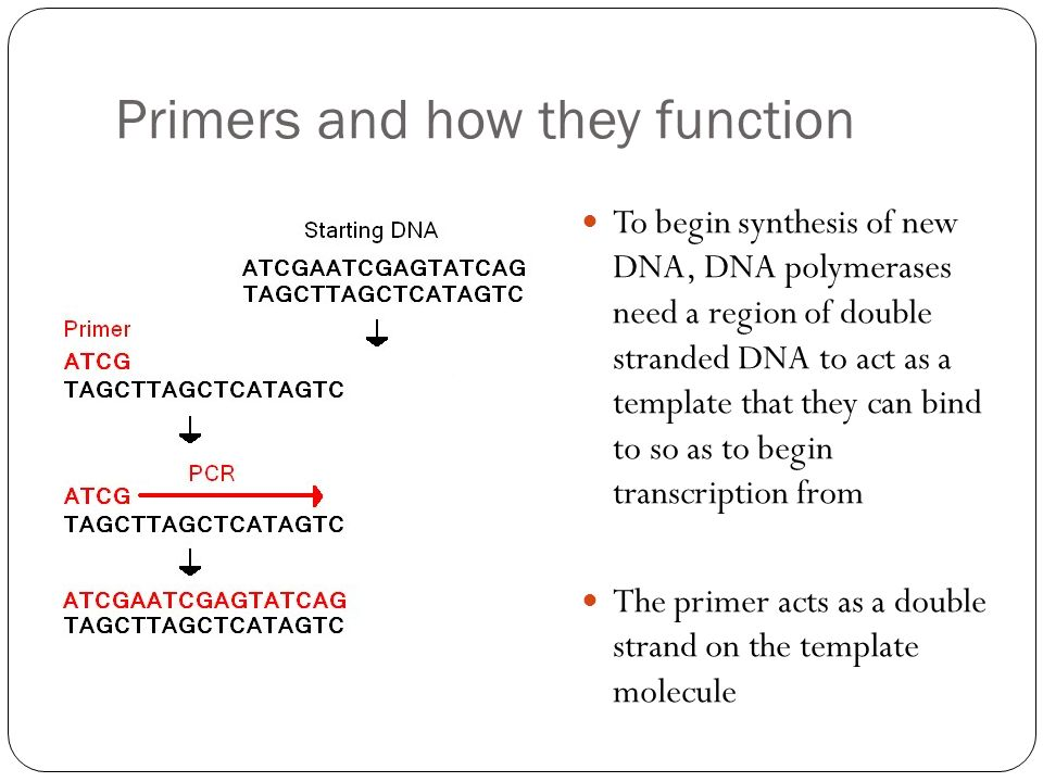 Primers and how they function