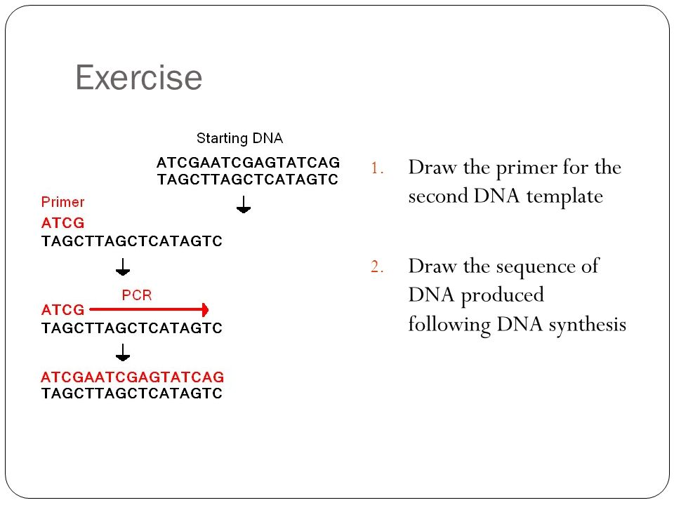 Exercise Draw the primer for the second DNA template