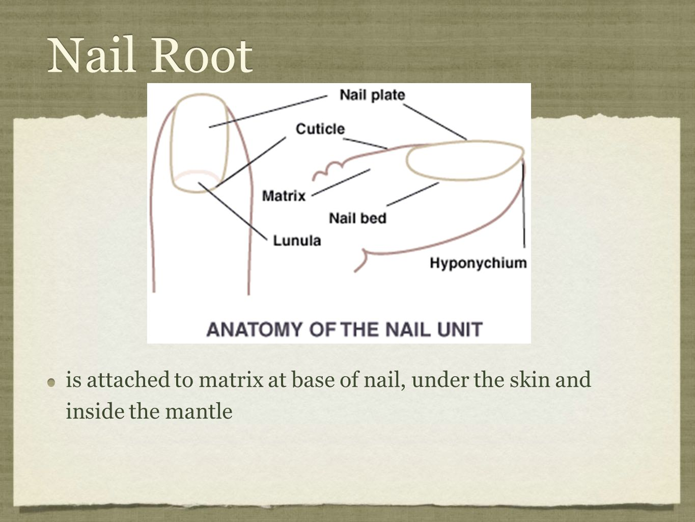 Nail Theory Chapter Ppt Video Online Download